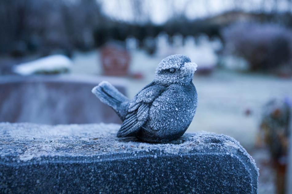 Bird frosen